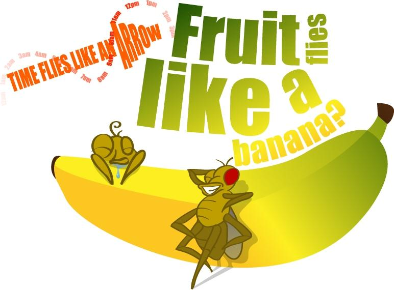 fruit fly clipart - photo #12