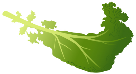 View Kale.jpg Clipart - Free Nutrition and Healthy Food