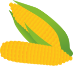 Corn_Cob.png - Corn, cob, vegetable
