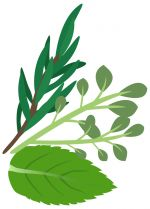 Select_Herbs.jpg - Herbs, Mint, rosemary, thyme, June,